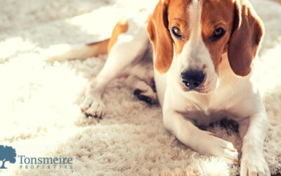 Preventing Pet Damage in Your Apartment