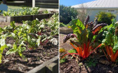 Tonsmeire Community Gardens